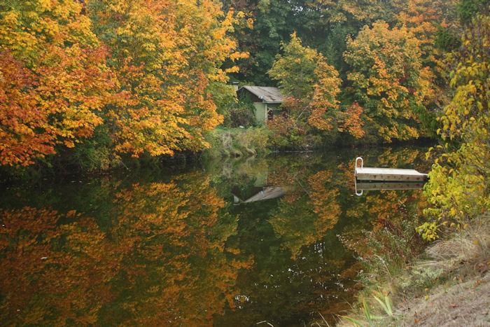 Autumn Reflection   Desiree Prakash Studio