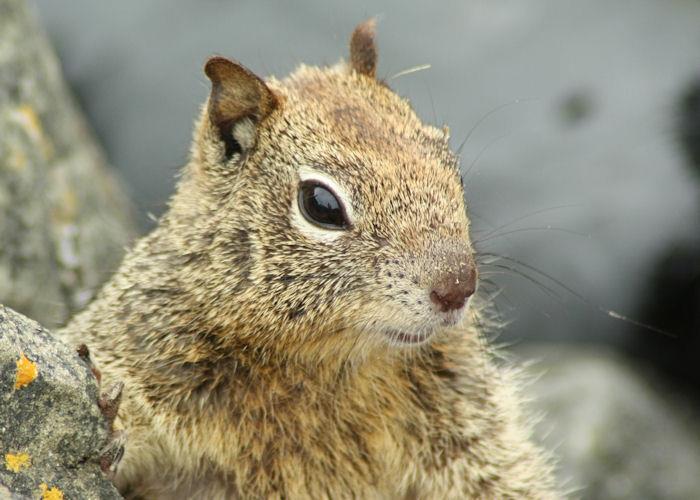 Squirrel | Desiree Prakash Studio