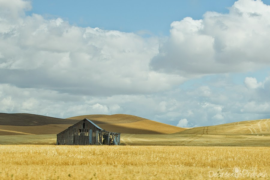 palouse barn | Desiree Prakash Studio
