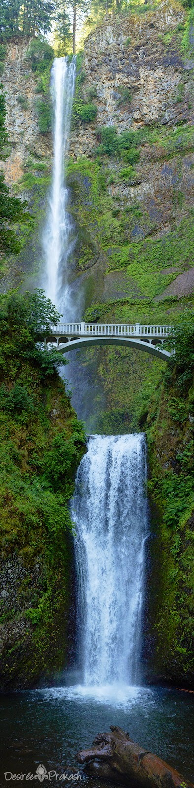 multnomah falls | Desiree Prakash Studio