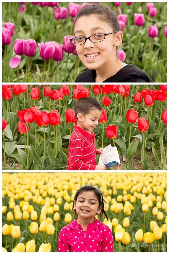 tulipcollage5