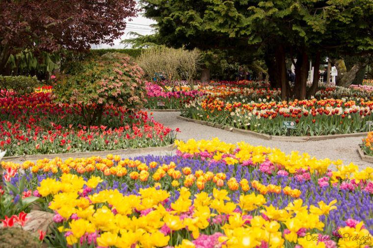 Roozengaarde garden | Desiree Prakash Studio